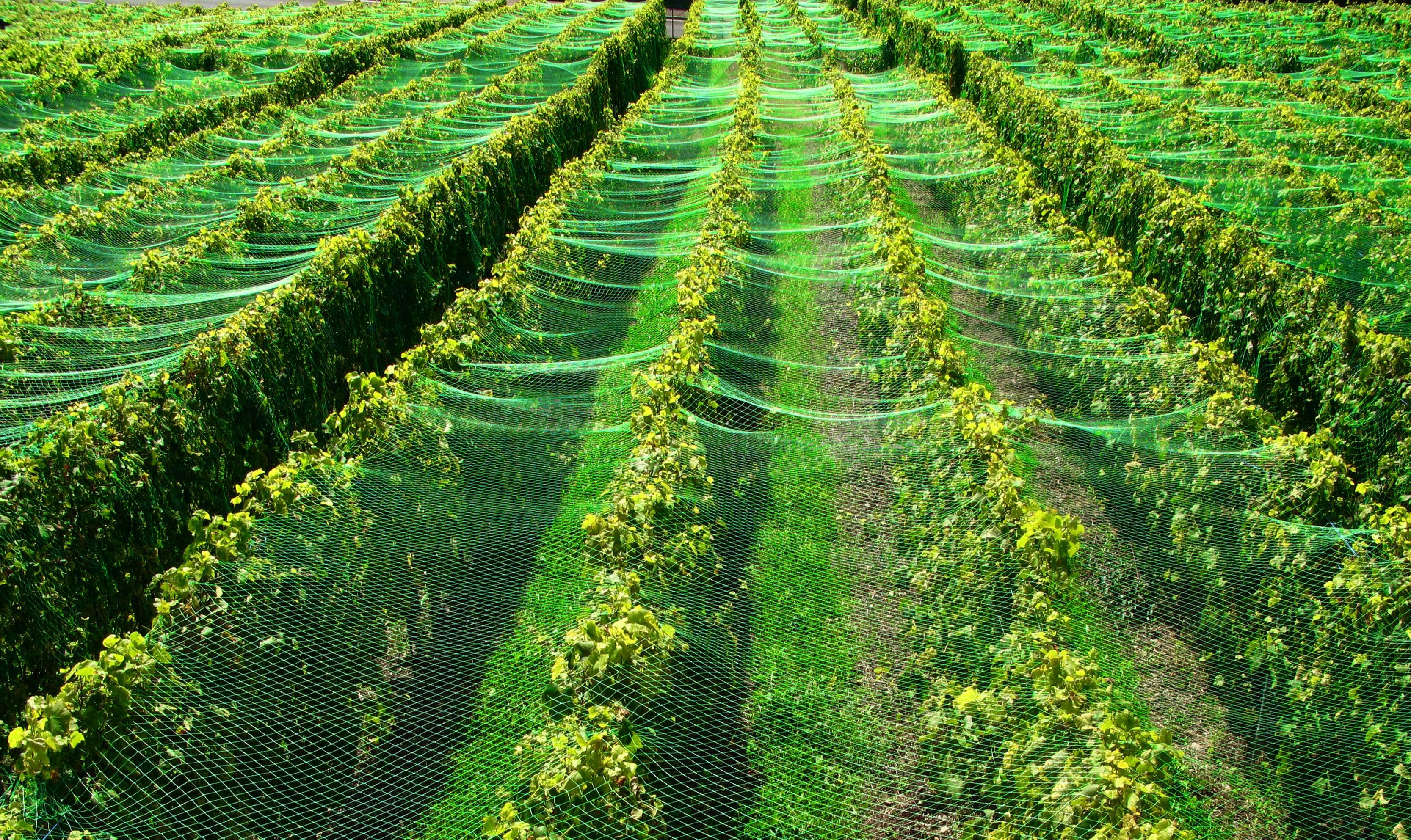 Teichnetz 20m x 8m Reiherschutz Silonetz Laubschutznetz